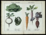 Coloured engravings of vegetables and roots