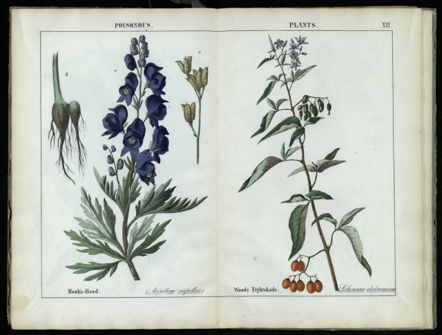 Coloured engravings of poisonous plants