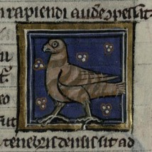 A hawk from a 13th century Bestiary. Trin MS R.14.9, f. 101r.