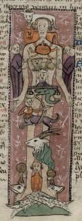 Zodiac man. Trin MS O.1.57.