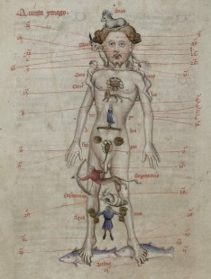 A Zodiac Man diagram showing the seasons for bloodletting from Liber Cosmographiae. Trin MS R.15.21.