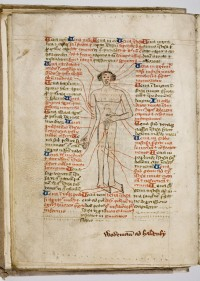"A medieval ""phlebotomy man"", a diagram showing the location of the major blood vessels in the human body. Trin MS O.1.57, f.16v."
