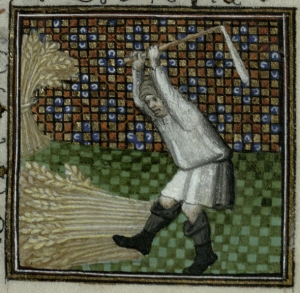 Threshing wheat using a flail. Trin MS B.11.31, f. 8r