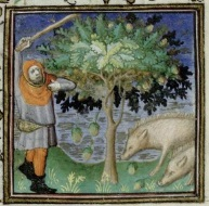 A swineherd beating acorns to the ground for his pigs to eat. Trin MS B.11.31
