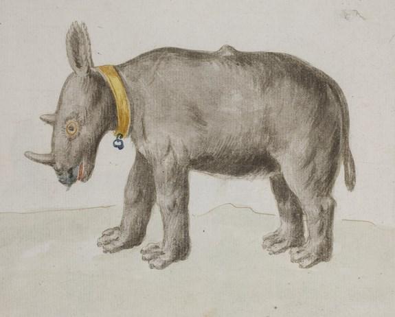 grey rhino