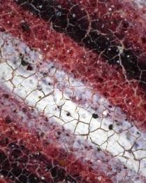 Trinity B.16.3_star1v_LEFT reddish-purple column_75x